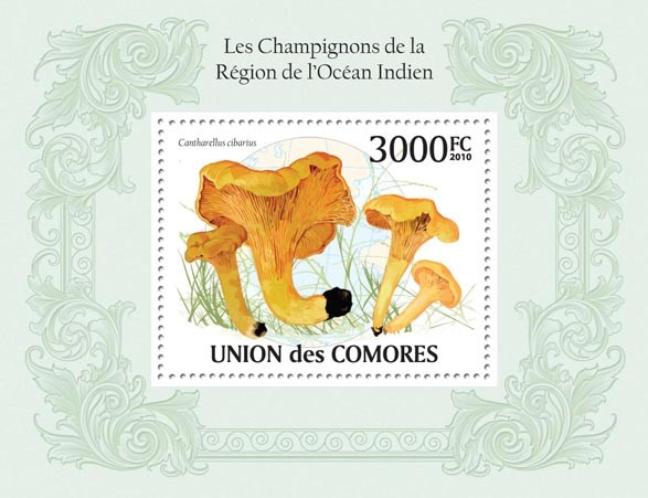 Mushrooms in Region of Indian Ocean, (Cantharellus cabarius). - Issue of Comoros postage stamps