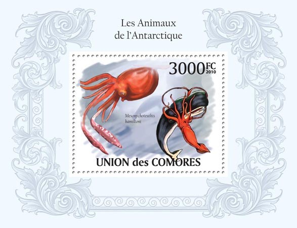 Antarctic Animals, Squids & Whales. - Issue of Comoros postage stamps