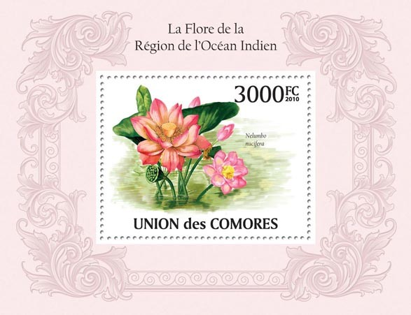 Flora in Region of Indian Region, Nelumbo nucifera. - Issue of Comoros postage stamps