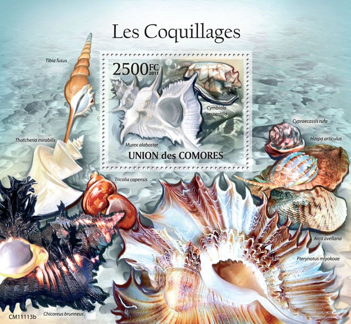 Shells (Murex alabaster). - Issue of Comoros postage stamps