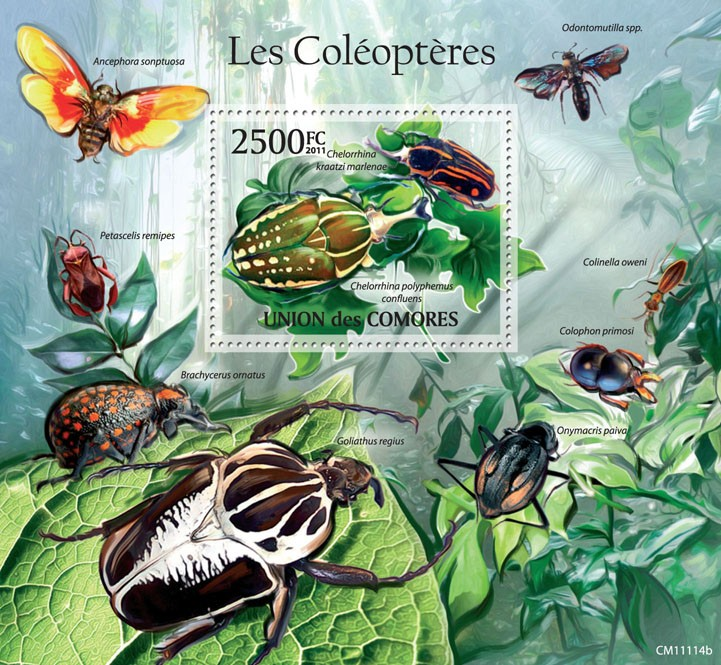 Beetles (Chelorrhia polyphemus confluens). - Issue of Comoros postage stamps