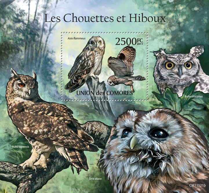 Owls I. - Issue of Comoros postage stamps