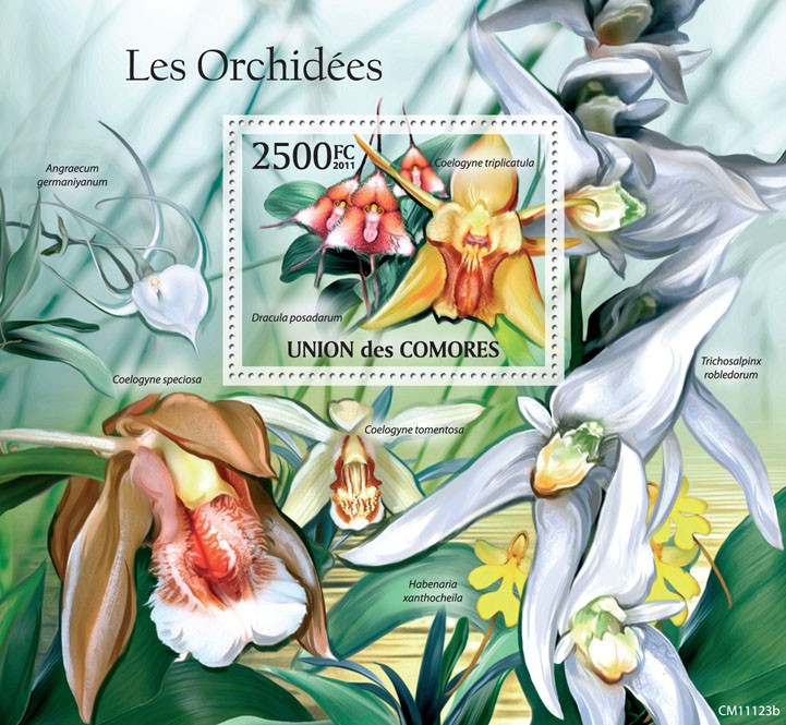 Orchids (Coelogyne triplicatula). - Issue of Comoros postage stamps