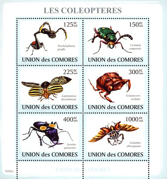 Beetles 6v - Issue of Comoros postage stamps