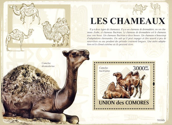 Camels s/s - Issue of Comoros postage stamps