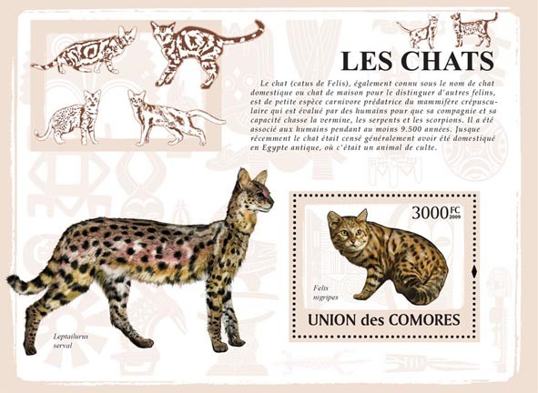 Cats - Issue of Comoros postage stamps