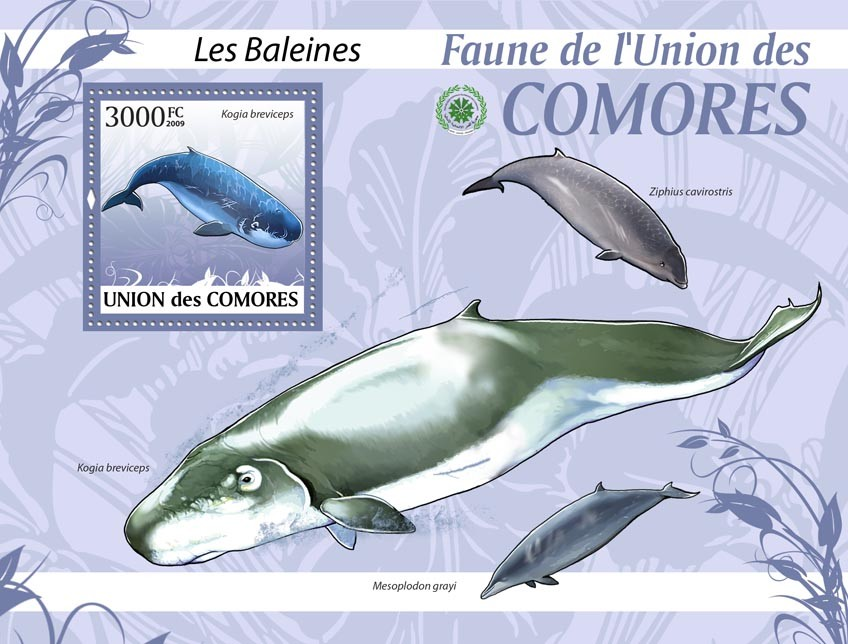 Whales Kogia breviceps?タᆵ - Issue of Comoros postage stamps