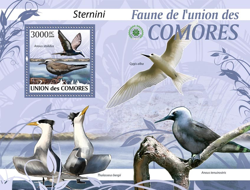 See birds, Anous stolidus?タᆵ - Issue of Comoros postage stamps