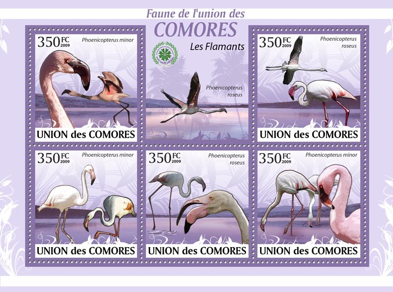 Flamingos Phoenicopterus minor ?タᆭ Phoenicopterus roseus?タᆵ - Issue of Comoros postage stamps