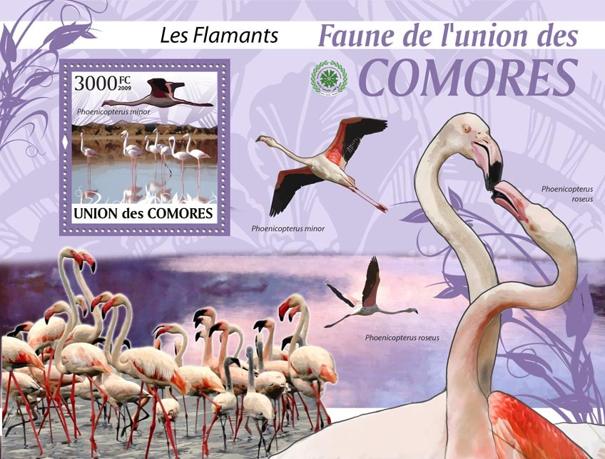 Flamingos Phoenicopterus minor?タᆵ - Issue of Comoros postage stamps