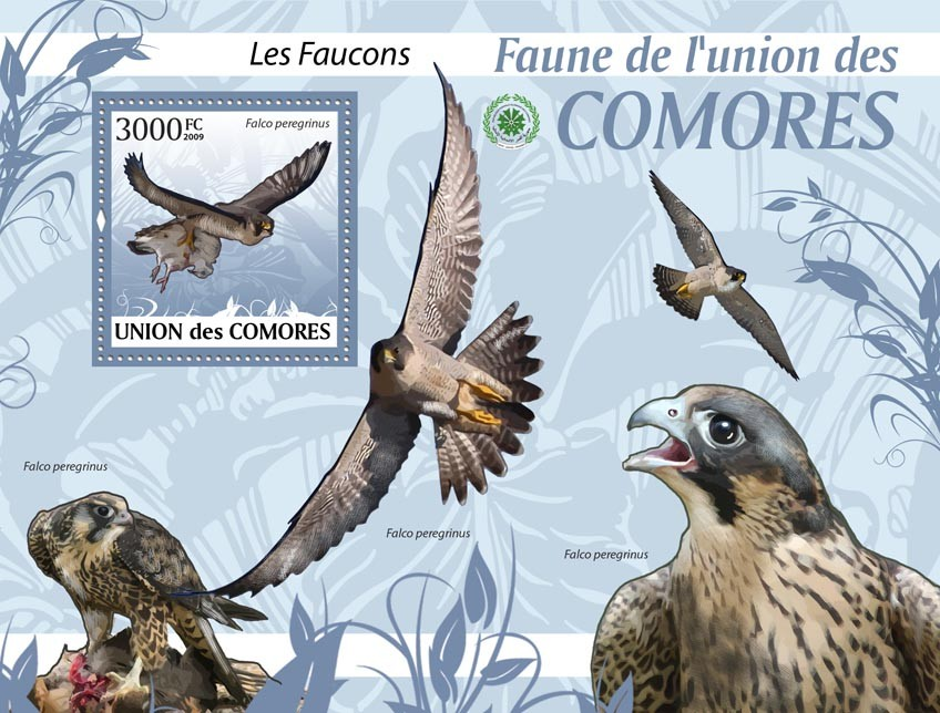 Hawks Falco peregrinus?タᆵ - Issue of Comoros postage stamps