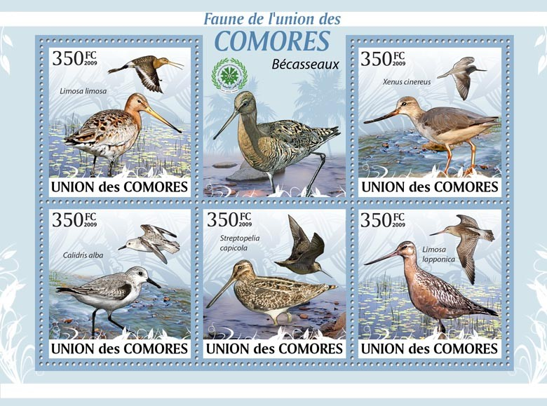 Sandpipers Limosa limosa?タᆭLimosa lapponica?タᆵ - Issue of Comoros postage stamps