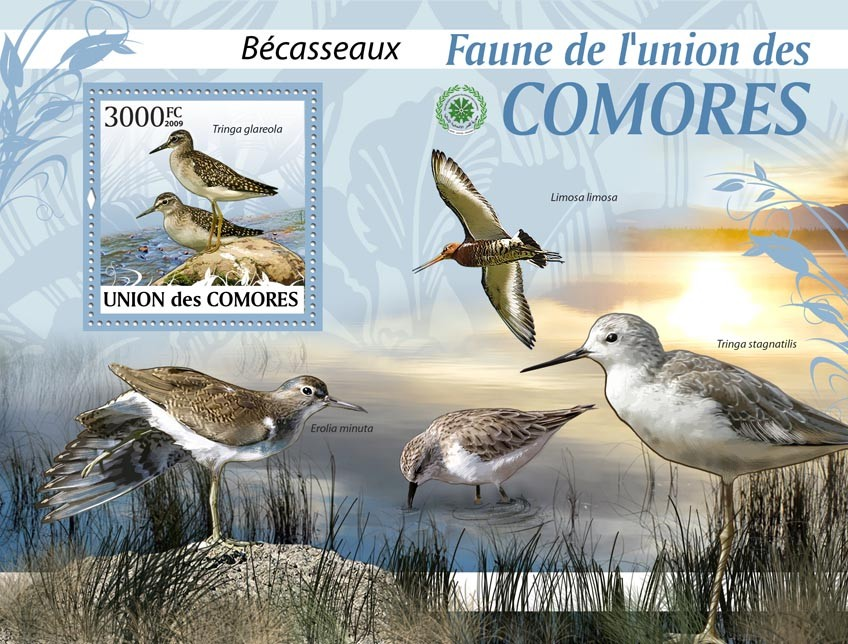 Sandpipers Tringa glareola?タᆵ - Issue of Comoros postage stamps