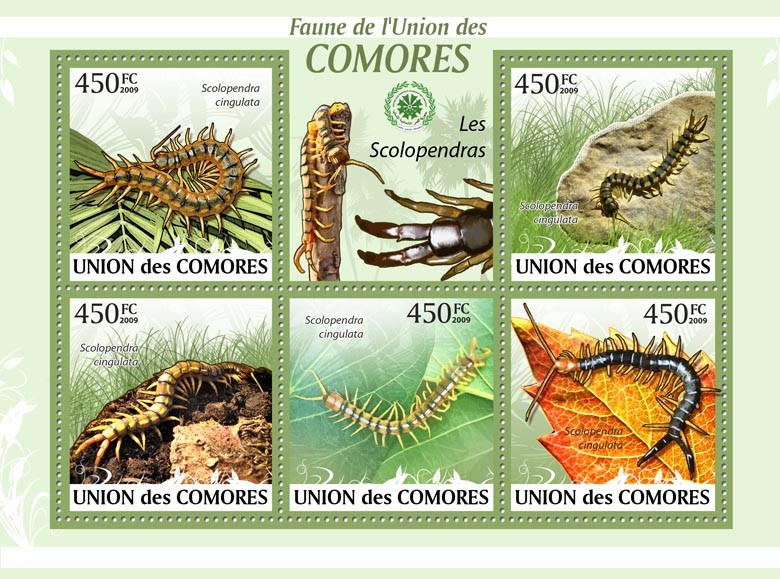 Centipede Scolopendra cingulata?タᆵ - Issue of Comoros postage stamps